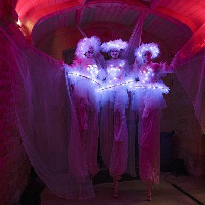 Echassiers blancs sous lumières colorées